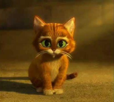 Котик — золотой лобик